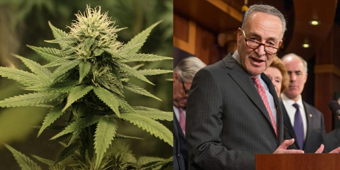 4/20: Schumer Introduces New Legislation That Supports Marijuana Decriminalization at the Federal Level